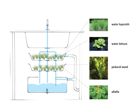wetland_diagram2
